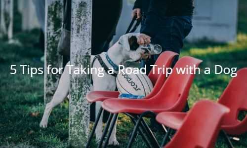 5 Tips for Taking a Road Trip with a Dog